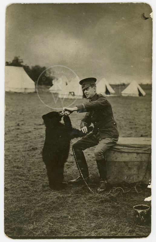 Postcard of Harry Colebourn feeding Winnie