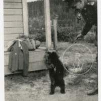 Francis Barber Starkey with bear cub